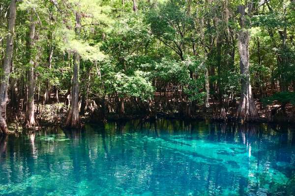 Manetee springs